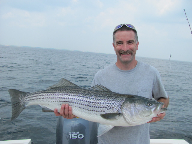 Striped Bass Newburyport MA