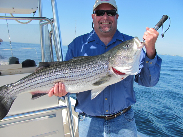 Deep water striped bass