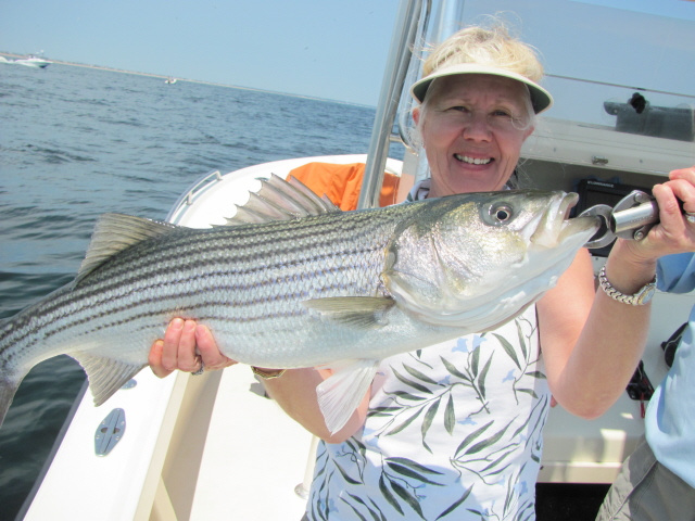 Merrimack River striper, Newburyport MA