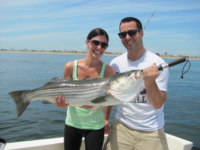 Striped Bass caught near Merrimack River, Newburyport MA