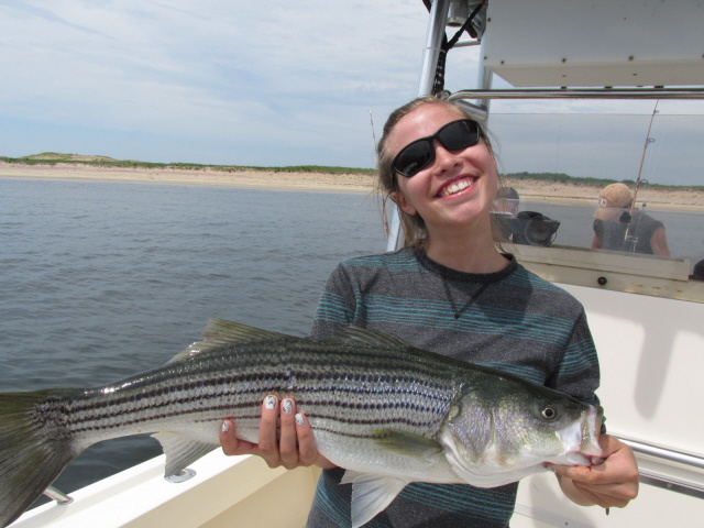 Striped bass report ma for Striped bass fishing reports