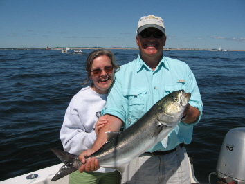 Bluefish at the mouth of the Merrimack River