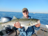 Chief Roy's Merrimack River striper