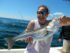 Fiesty striper caught in the Merrimack River