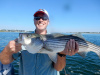 Iain's live lined striper