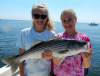 Megan's 1st live lined striper!