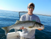 Nick's Merrimack River striper