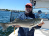 Catching bass on Summer Job Charters, Newburyport