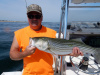 Sully's live lined striper