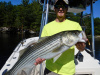 The Merrimack is a striper magnet!