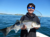Connor's Plum Island striper