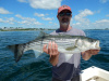 Tim's striper caught on a live mackerel