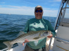 Scott's Merrimack River striper