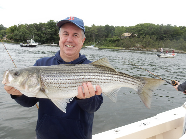 Jim's Merrimack River striped bass