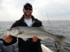 Merrimack River striper caught by Rick