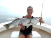Merrimack River striper caught by Sara Brown