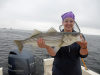 Merrimack River Striped Bass caught by Stephaine