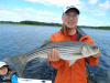 Newburyport striped bass caught by David